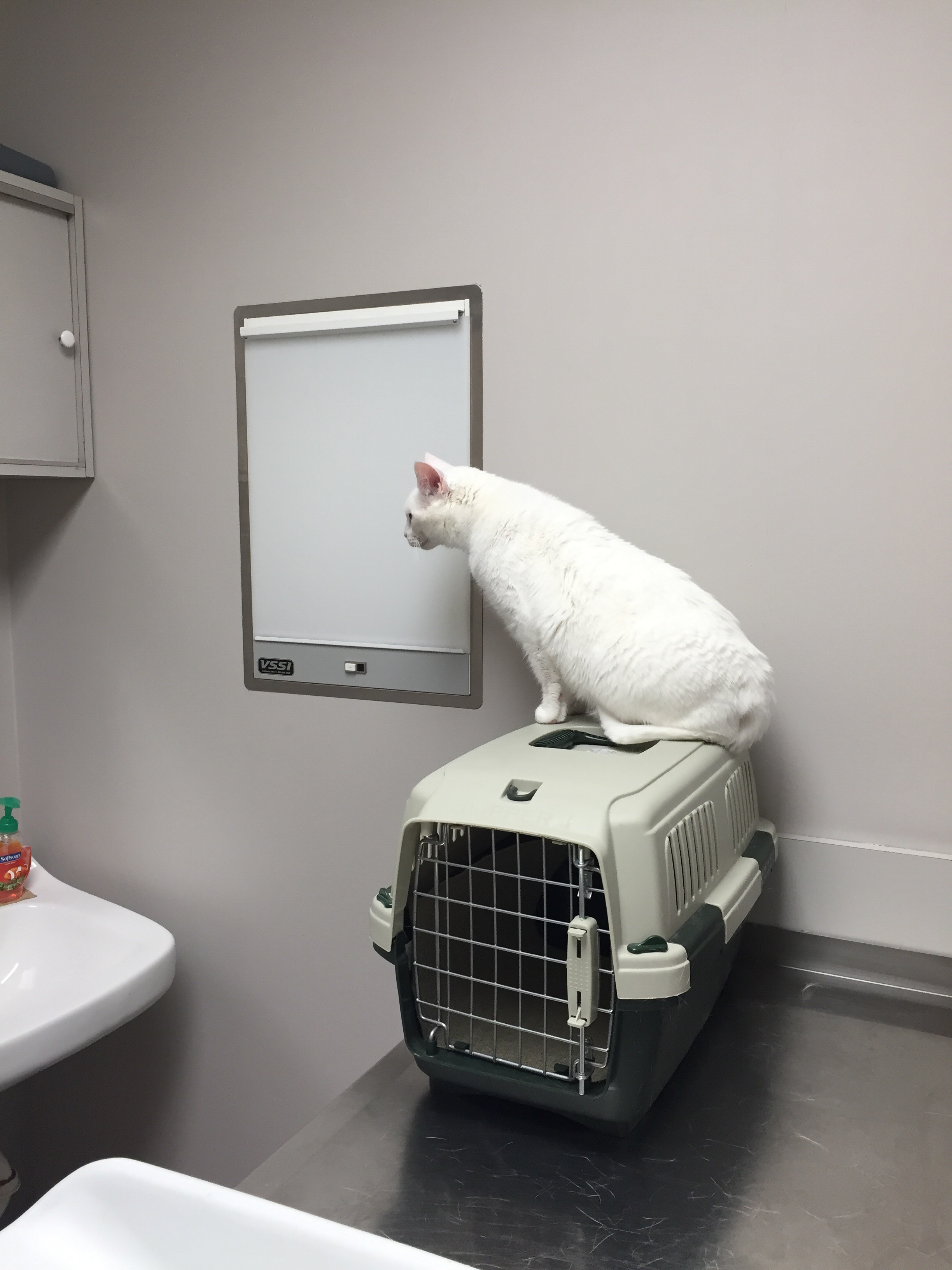 Little White Kitty Goes To Vet ER